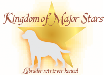 Kingdom Of Major Stars